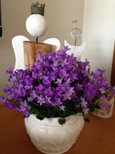 Bachs blomstermedicin, Vejle, Kolding, Horsens, Fredericia